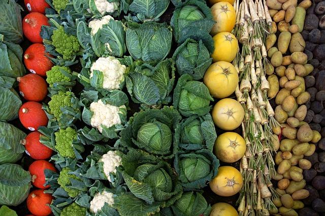 zelenina v řádcích