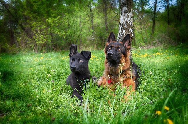psi v trávě