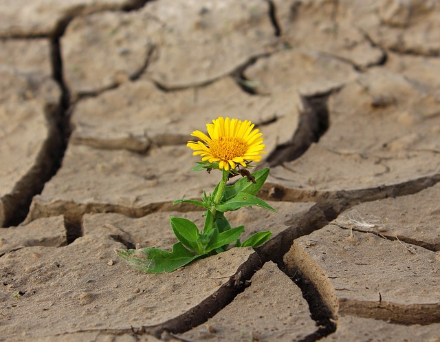 květina na suchu.jpg