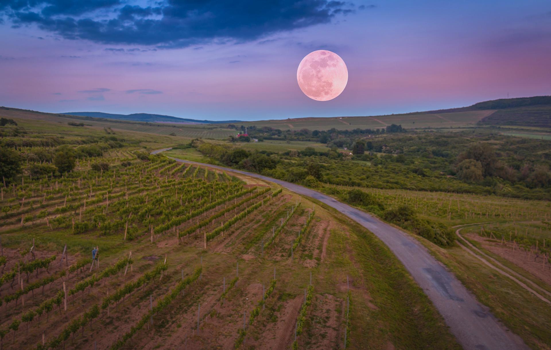 západ slunce nad vinicí