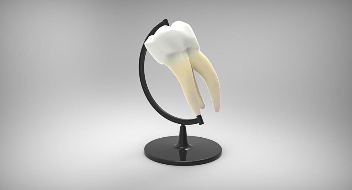 zub jako glóbus